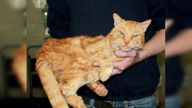 La odisea del gato Poldi: a punto de volver a casa después de vagabundear 16 años