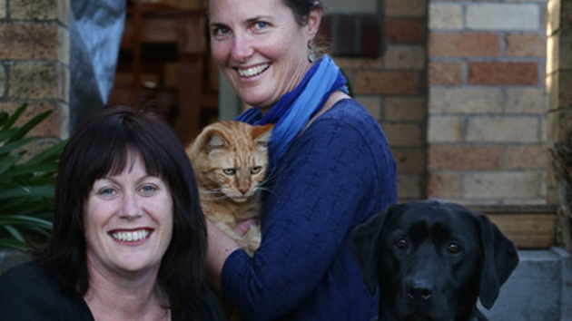 Un perro salva la vida de un gato 'donándole' su sangre