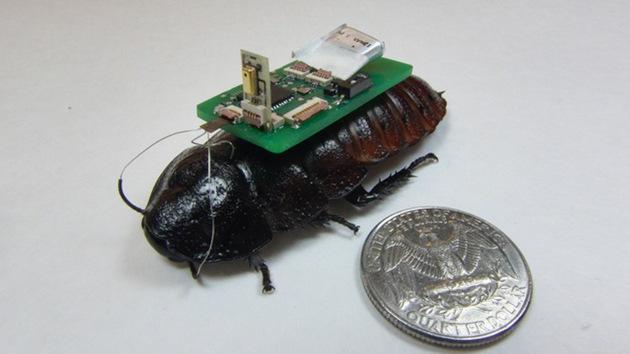 'Cucaracha cíborg' salvará vidas en el futuro