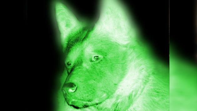 Creado en Corea del Sur un perro luminiscente