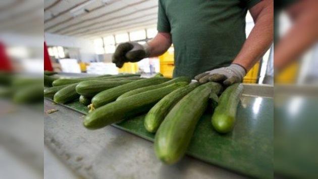 Rusia prohíbe la importación de hortalizas de la UE