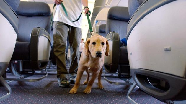 Pasajeros se niegan a volar por la expulsión del avión de un ciego y su perro guía