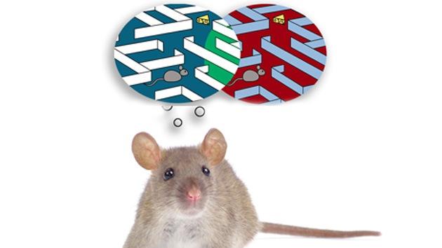 Científicos consiguen implantar falsos recuerdos en ratones