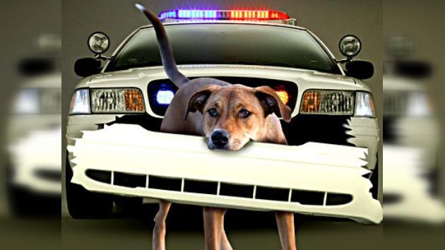 Un ataque a la policía puede salir caro, hasta para un perro