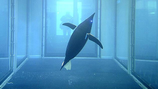 La Marina de EE.UU. retira a los delfines de desminado en favor de robots