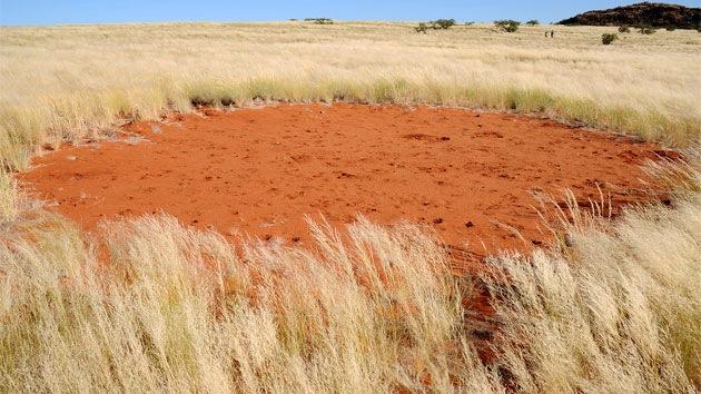 ¿Qué significan los 'círculos mágicos' en los pastizales de Namibia?