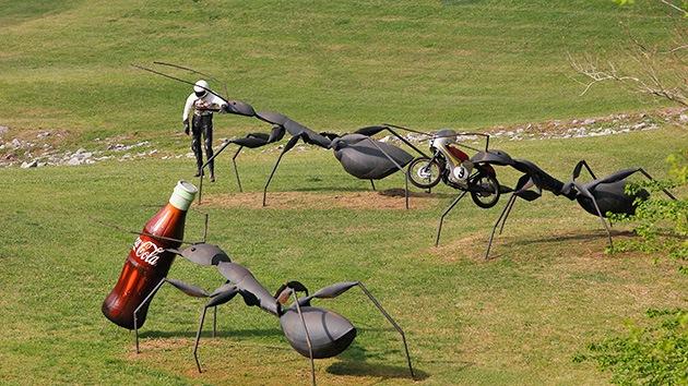 Las hormigas tienen la clave para crear robots de rescate