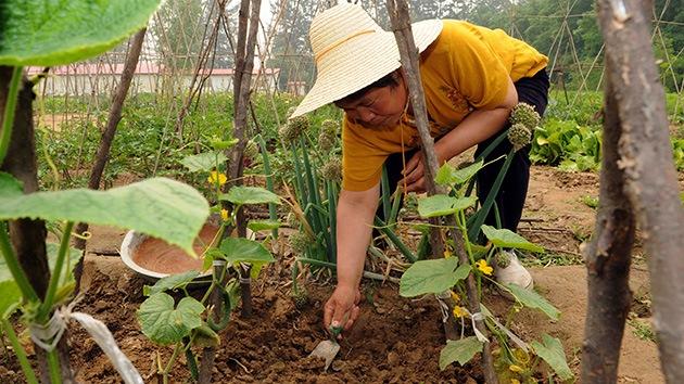 Más de 3 millones de hectáreas de tierra en China están contaminadas