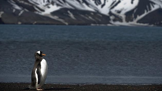 Descubren diamantes en las entrañas de la Antártida