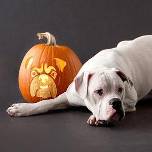 Halloween: nuevas ideas para la decoración