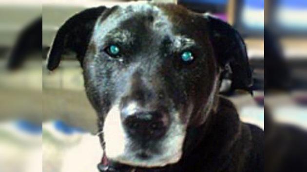 Un perro de EE. UU. es nominado a un premio por salvarle la vida a su dueño