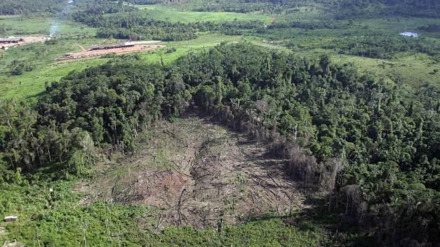 El Amazonas perdió más de 4.600 kilómetros cuadrados de selva en 2012