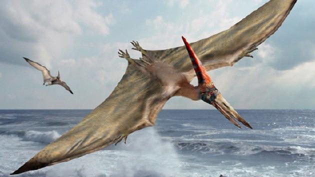 Una niña británica de cinco años descubre una nueva especie de dinosaurio