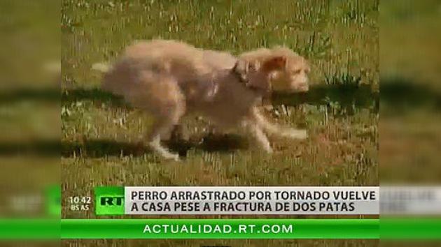 Un perro regresa a casa gravemente herido tras un tornado en EE. UU.