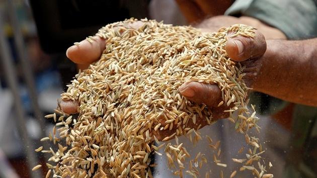 ¿Cómo alimentar a 7.000 millones de personas sin destruir el planeta?