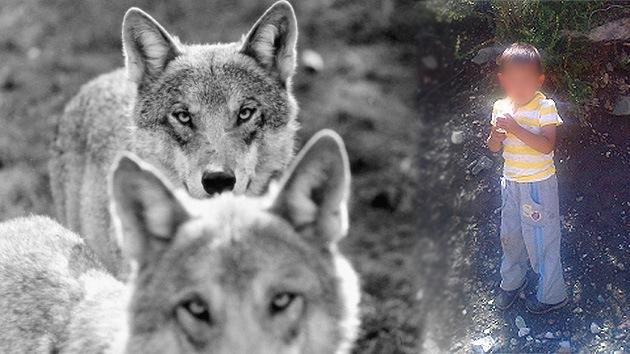 Un niño de tres años perdido en Siberia se salvó de los lobos lanzándoles piedras