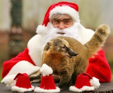 La alegría navideña de los animales de zoos mundiales