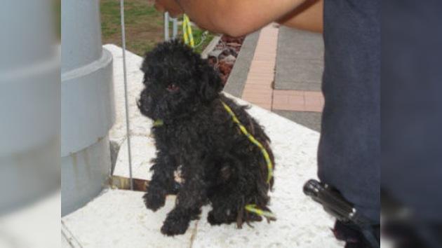 Una bandera viviente: policías mexicanos cuelgan a un cachorro en un asta