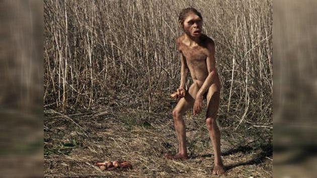 Encuentran un esqueleto casi completo de Homo habilis