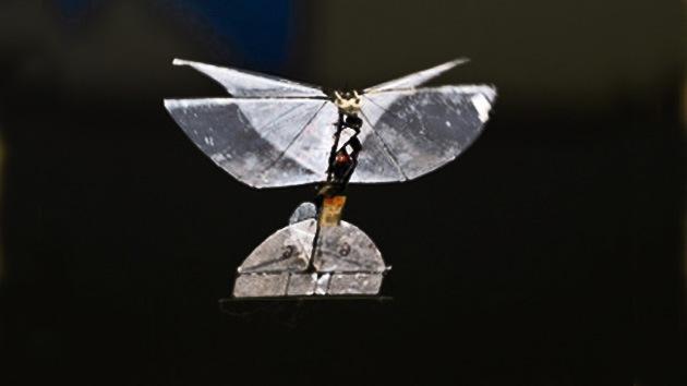 La mariposa-espía de Israel, una auténtica revolución en el mundo de los drones