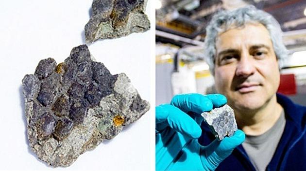 Hallan una muestra de piel de dinosaurio en Canadá