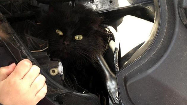 Video: Rescatan a una gata que pasó dos semanas en el motor de un coche