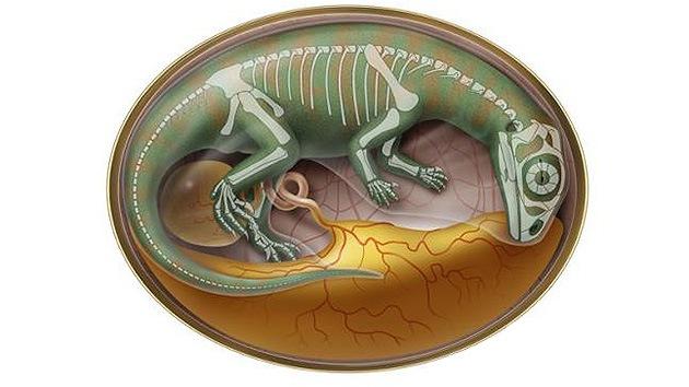 Hallan en China embriones de dinosaurios