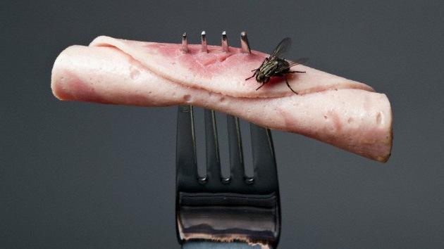 Alerta médica: Enfermedades animales 'atacan' a los humanos