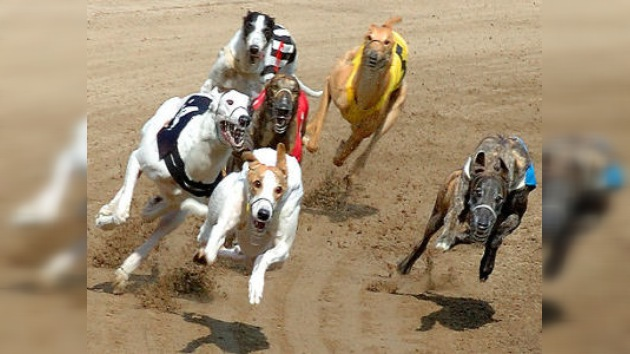 Las elecciones británicas se 'deciden' en una carrera de perros
