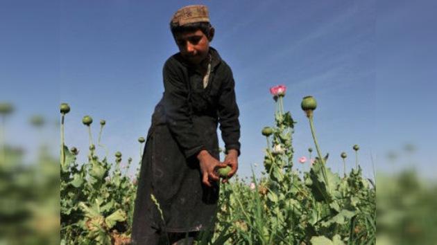 La OTAN contra el opio afgano: ¿una batalla perdida?