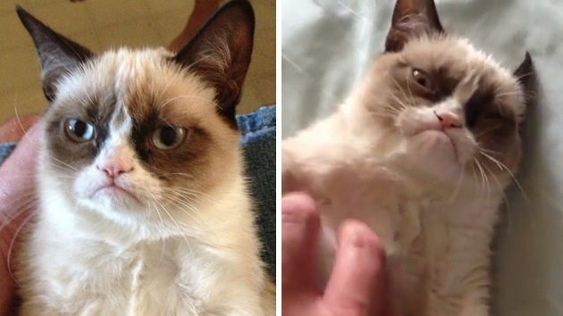 Video: Un gatito malhumorado cosecha millones de admiradores en YouTube