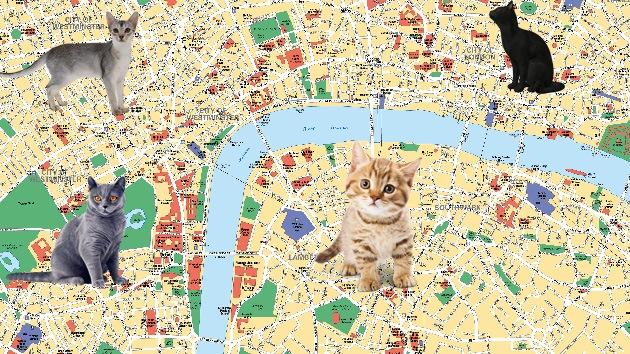 El zoológico de Londres crea un mapa interactivo de los gatos de la ciudad