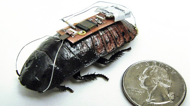 Video: Crean una cibercucaracha manejada por control remoto