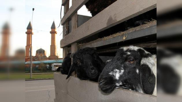 Artistas piden que limiten los sacrificios durante el Eid al-Adha en Moscú