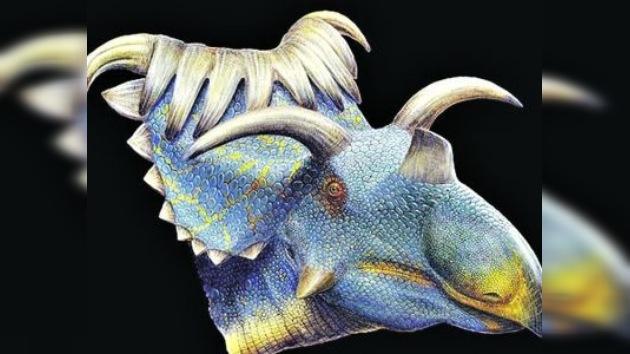 Descubierto el dinosaurio más 'cornudo'