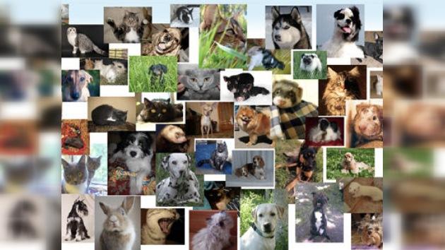 ¡Que tiemblen Twitter y Facebook! Ha nacido la primera red solo para mascotas
