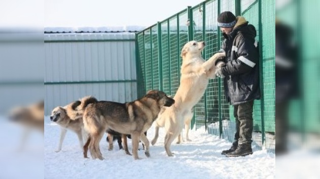 'Perro y Gato', el lugar donde los animales vagabundos encuentran cobijo