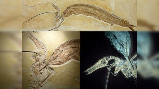 Paleontólogos hallan rastros de un antiguo 'festín de muerte'