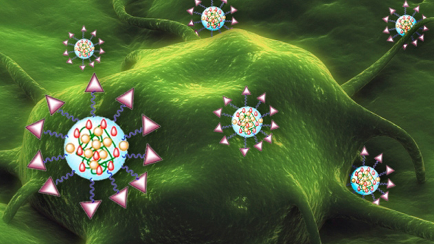 Nanotransbordadores para la cura del cáncer de vejiga