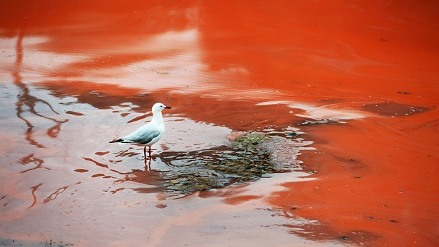 Fotos: Las aguas de Australia se tornan rojas como la sangre