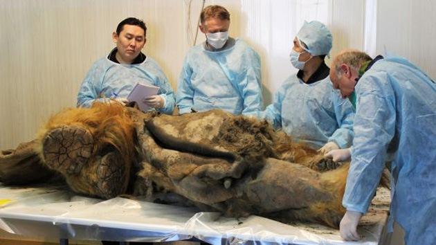 Científicos, a un paso de clonar el primer mamut de la historia