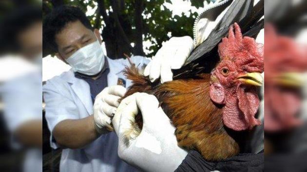 Dejan de investigar el virus más peligroso para evitar una 'epidemia' de alarmismo