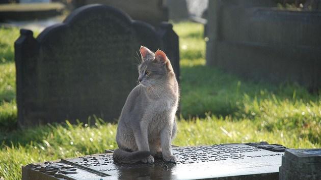 Maúlla al más allá: Un gato visita a diario la tumba de su amo con 'regalos'