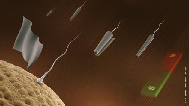 Video: Crean espermatozoides robot controlados a distancia
