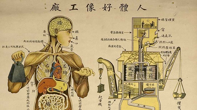 Fotos: Anatomía 'made in China': El cuerpo humano funciona como una fábrica