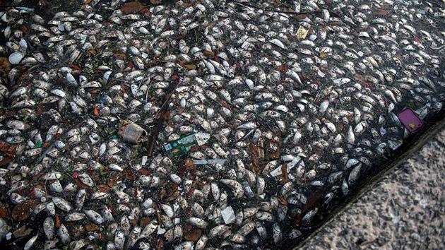 Brasil no se explica la aparición de miles de peces muertos