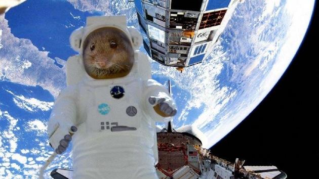 El Arca de Noé espacial: el Bion-M aterriza con éxito en Rusia