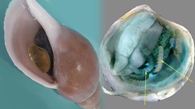 Descubren cuatro insólitas criaturas submarinas en el Atlántico Norte