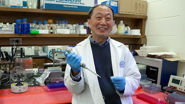Científicos desarrollan un hígado con células madre