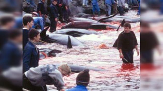 """Dinamarca: """"Mata a un delfín para celebrar tu mayoría de edad"""""""